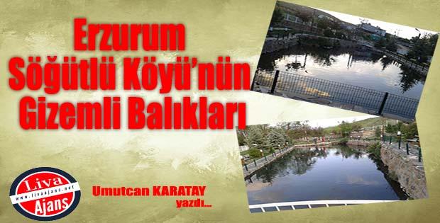 Erzurum Söğütlü Köyü'nün Gizemli Balıkları