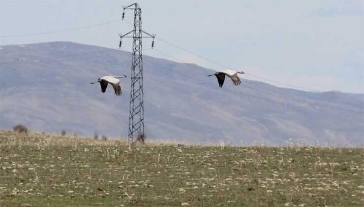 Erzurum'daki göl ilkbaharın gelmesiyle göçmen kuşların evi oldu