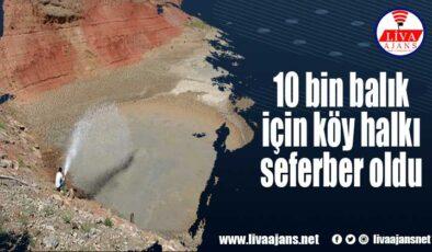 10 bin balık için köy halkı seferber oldu