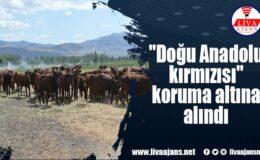 """""""Doğu Anadolu kırmızısı"""" koruma altına alındı"""